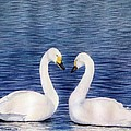 Swan Love by Sharon Farber