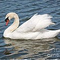Swan On Blue Waves With Border by Carol Groenen