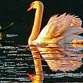Swan On Rockland Lake by Thomas  McGuire