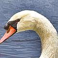 Swan Portrait by Alice Gipson