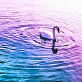 Swan Ripples by Priya Ghose