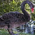 Swan Song by Kathleen Bishop