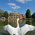 Swan Spreads Wings In Front Of State Theatre Stuttgart Germany by Matthias Hauser