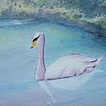 Swan Study by Gilbert Pennison
