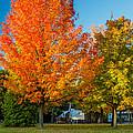 Sweet Autumn by Steve Harrington