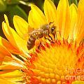 Sweet Bee by Laarni Montano