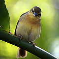 Sweet Bird On Branch by Carol Groenen