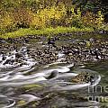 Sweet Creek by Stuart Gordon