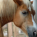 Sweet Face by Aimee L Maher ALM GALLERY