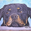 Rottweiler's Sweet Face by Megan Cohen
