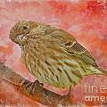 Sweet Female House Finch 3 - Digital Paint by Debbie Portwood