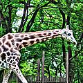 Sweet Giraffe by Alice Gipson