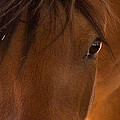 Sweet Horse Face by Natalie Rotman Cote