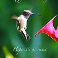 Sweet Hummingbird Birthday Card by Carol Groenen
