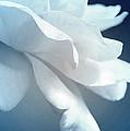 Sweet Light Of Heaven by The Art Of Marilyn Ridoutt-Greene