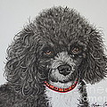 Sweet Miss Molly The Poodle by Megan Cohen