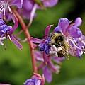 Sweet Nectar by Cathy Mahnke
