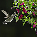 Sweet Nectar by David Johnson
