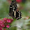 Sweet Nectar by Denyse Duhaime