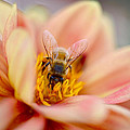 Sweet Nectar by Donna Blackhall
