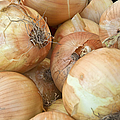 Sweet Onions Nj Grown by Regina Geoghan