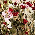Sweet Pea Swath by RC DeWinter