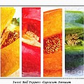 Sweet Pepper Watercolor by Barbara Griffin