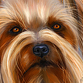 Sweet Silky Terrier Portrait by Michelle Wrighton