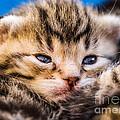 Sweet Small Kitten  by Juergen Ritterbach