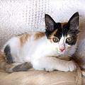Sweet The Kitten by Gina Dsgn