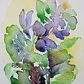 Sweet Violets by Zaira Dzhaubaeva