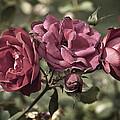 Sweetly Pink by Christi Kraft
