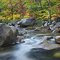 Swift River In Fall White Mountains New by Tim Fitzharris
