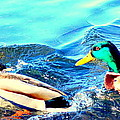 Some Ducks Are Just Happily Swimming With Their Team  by Hilde Widerberg