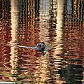 Swimming Over Reflections by Goyo Ambrosio