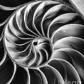 Swirl IIi by Bruce Bain