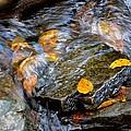 Swirling Stream Of Leaves  by Patricia Twardzik