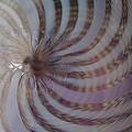Swirls by Yvette Pichette