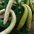 Swirly Gourds by Elaine Duras
