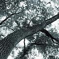 Swirly Tree by Angie Staft