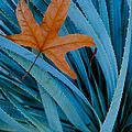 Sycamore Leaf And Sotol Plant by John Shaw