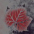 Sycamore Leaf by Lovina Wright