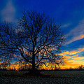 Sycamore Sunset by William Jobes