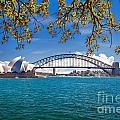 Sydney Harbour Skyline 2 by Az Jackson
