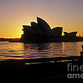 Sydney Morning by Inge Riis McDonald