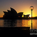 Sydney Sunrise by Inge Riis McDonald