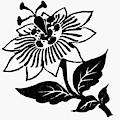 Symbol Passion Flower by Granger