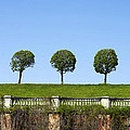 Symmetric Trees Over Old Fence by Elena Paskova