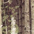 Symmetrical Evergreens  by Cheryl Baxter