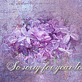 Sympathy Greeting Card - Lilacs by Mother Nature